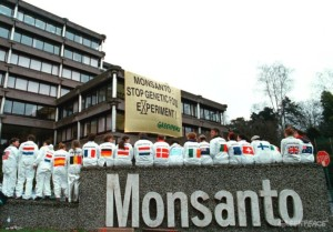 monsanto devastates farmers and evironment